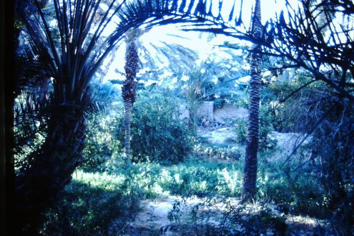 Bouwval in de tuinen rondom het hotel.