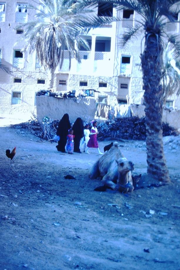 Vrouwen en kameel.